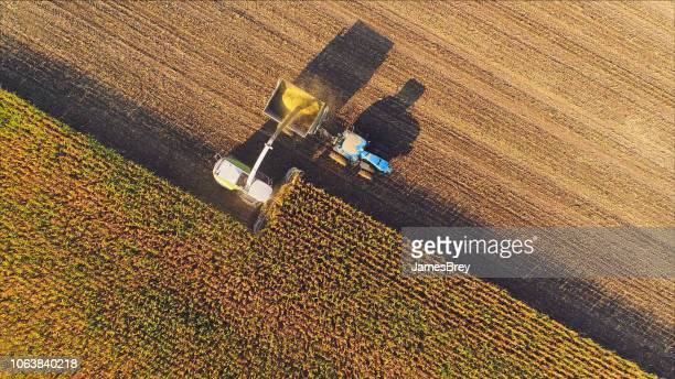 farm machines harvesting corn, aerial view. - black and white vegetables stock photos and pictures