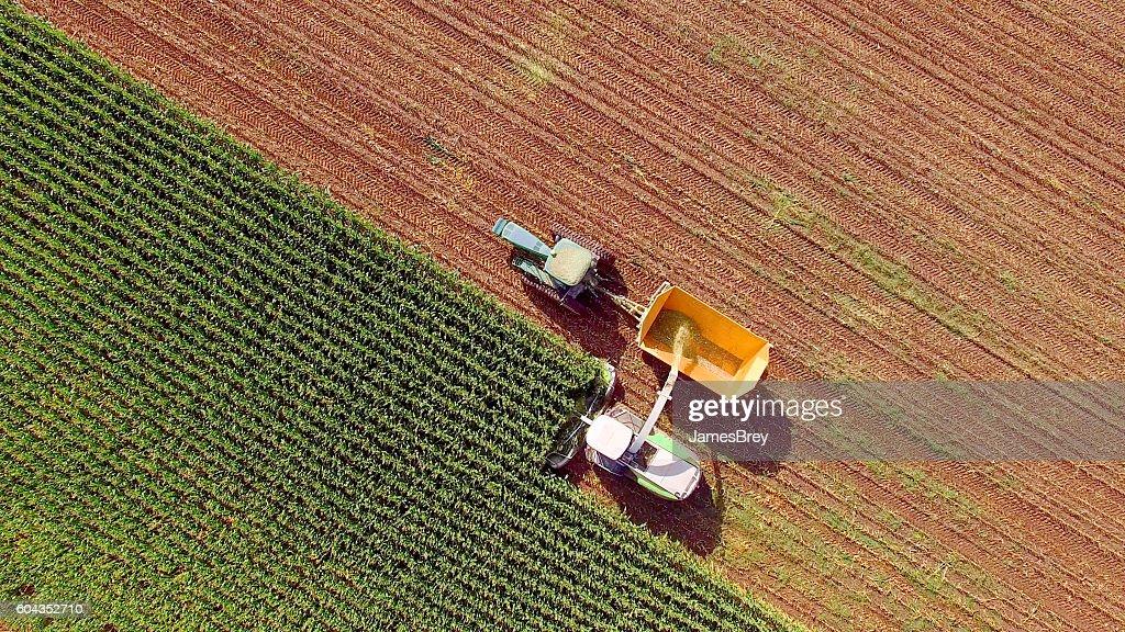 Farm machines harvesting corn for feed or ethanol : Foto de stock
