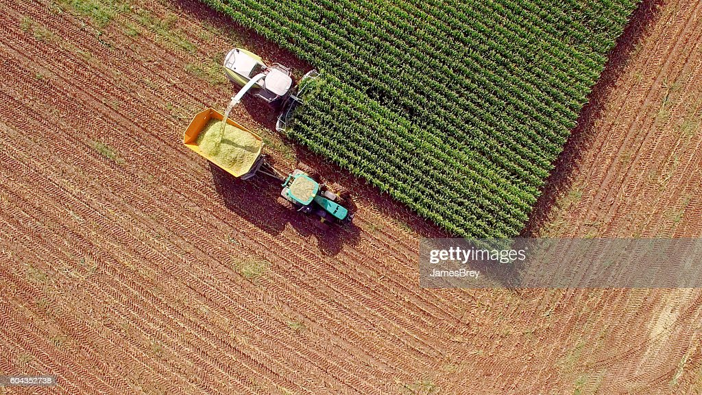 Farm machines harvesting corn for feed or ethanol : Stock Photo