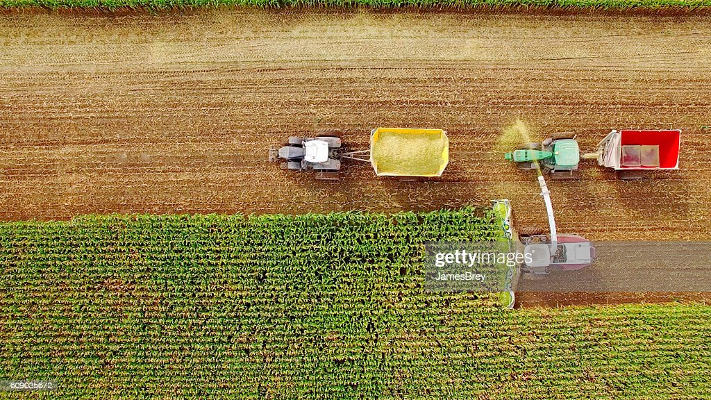 Farm machines harvesting corn in September, viewed from above : ストックフォト