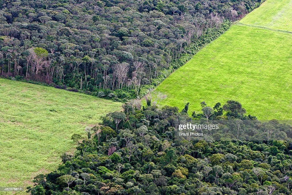Farm management, soy plantation in Amazon rainforest near... : News Photo