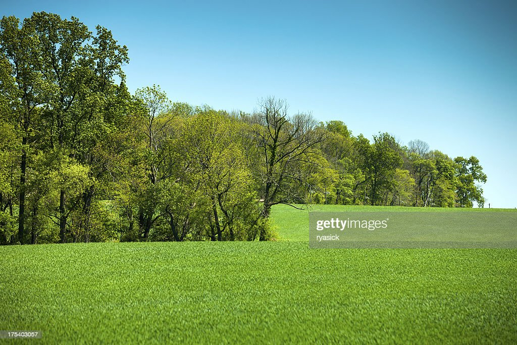 Farm Meadow and Tree Line In Spring : Stock Photo