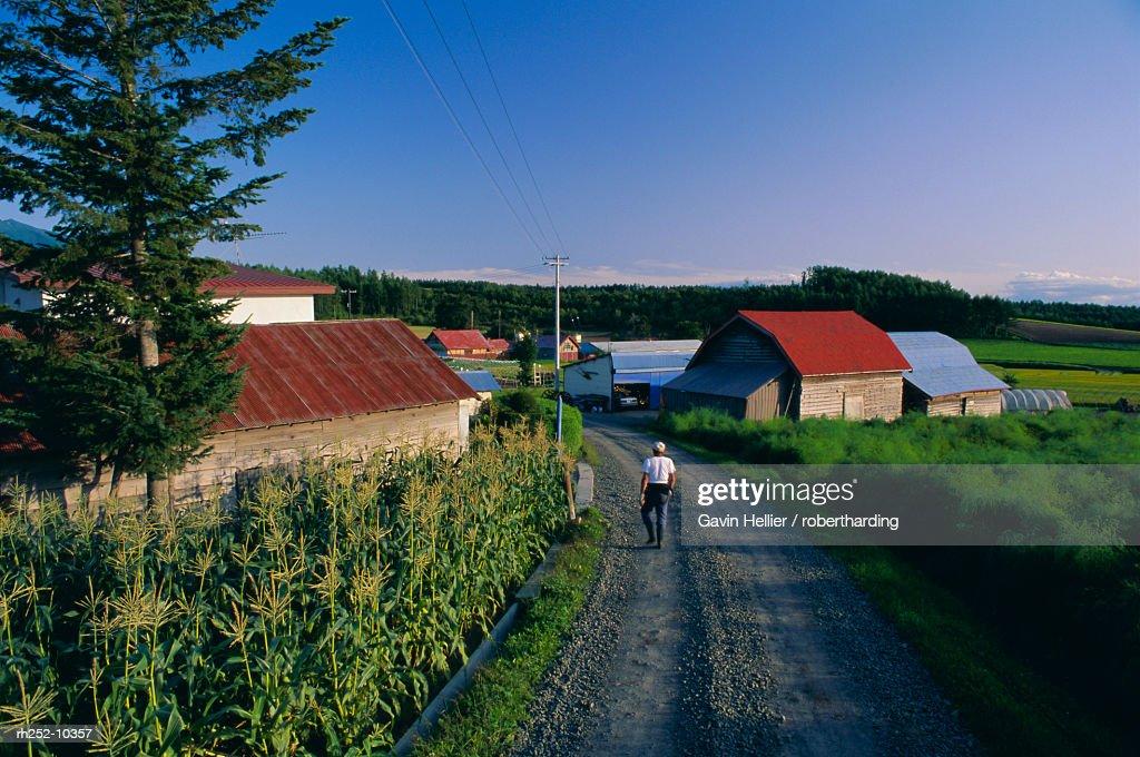 Farm near Asahikawa, Hokkaido, Japan, Asia : Foto de stock