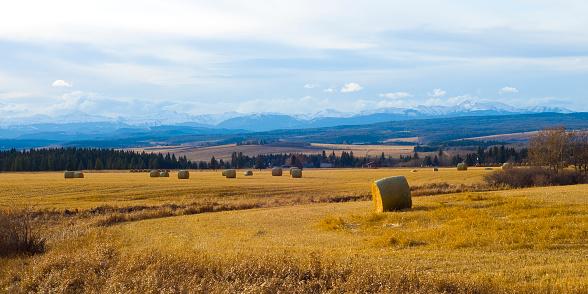 Farm near Rocky Mountains in sunlight  155237280