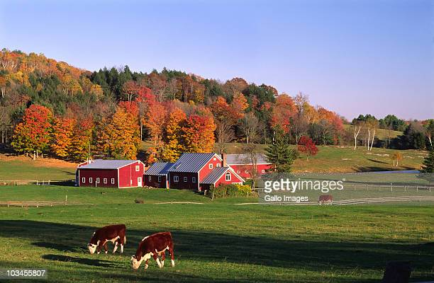 farm near thetford, vermont, usa - barn stock pictures, royalty-free photos & images