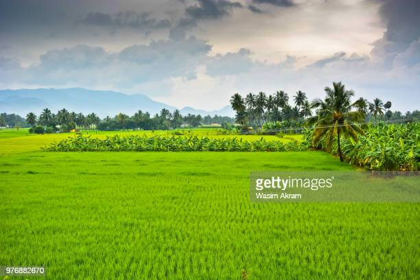farm on cloudy day, salem, tamil nadu, india - tamil nadu stock pictures, royalty-free photos & images