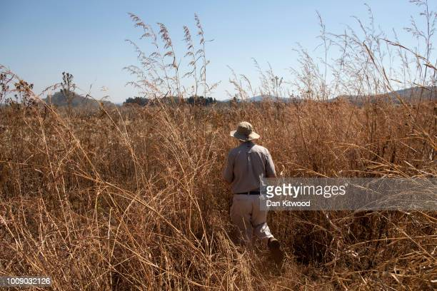 Farm owner Andrew Pascoe visits one of his corn fields as it is harvested at Ivordale Farm on August 1, 2018 outside Harare, Zimbabwe. Commercial...