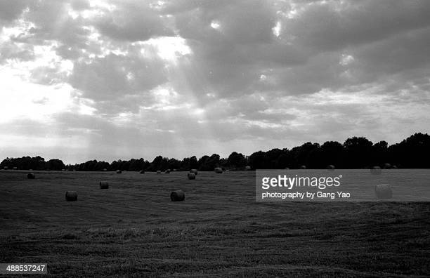 farm - athens georgia stock pictures, royalty-free photos & images