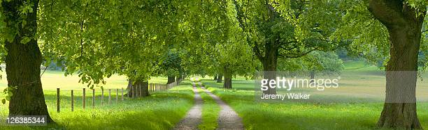 farm track through meadow,  summer, yorkshire, england. - meadow walker stock pictures, royalty-free photos & images