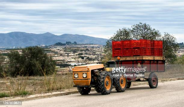 farm tractor next to a field laden with boxes of oranges. - fruit laden trees stock pictures, royalty-free photos & images