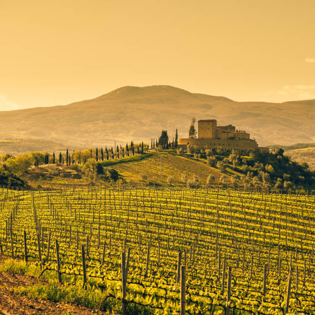 Farm Tuscany Vineyard