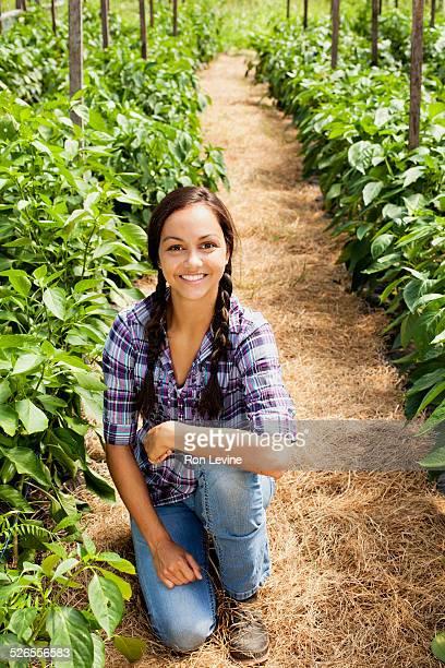 Farm worker amongst pepper plants in greenhouse