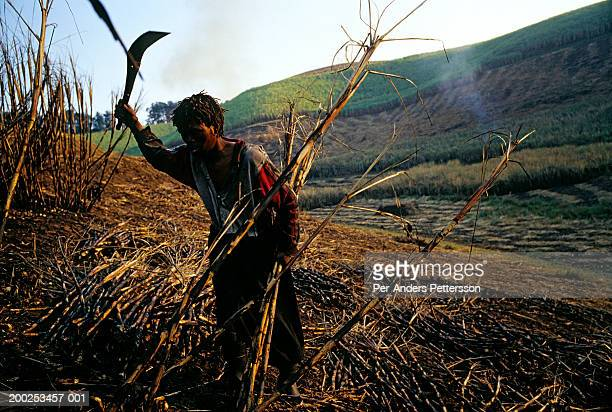 A farm worker cuts sugar cane during harvesting in Doornkop in Natal Province, South Africa