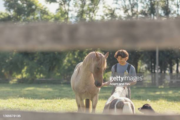farm worker feeds horse and pony - filipino ethnicity and female not male fotografías e imágenes de stock