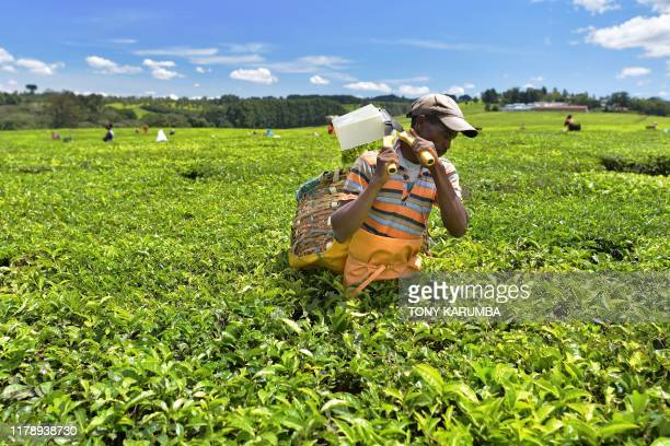 A farm worker harvests tea leaves using shears at a plantation in Kenya's Kericho highlands Kericho county approximately 296 kilometres northwest of...