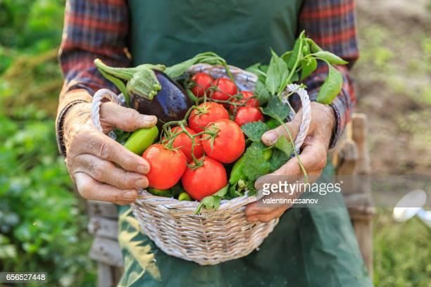 Landarbeiter hält einen Korb mit Gemüse im Garten