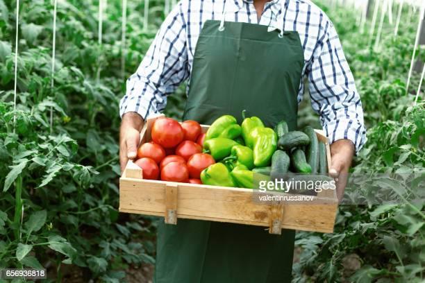 trabajador agrícola con un cajón con hortalizas en invernadero - pimientos fotografías e imágenes de stock