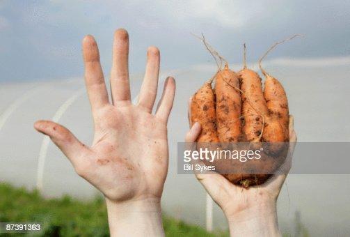 farm worker holding odd shaped carrot