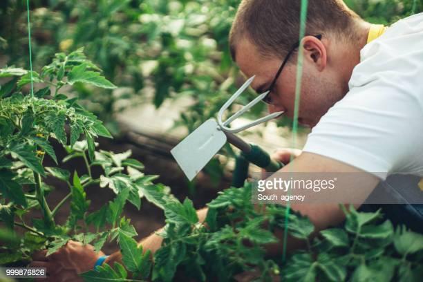 Farm worker in greenhouse