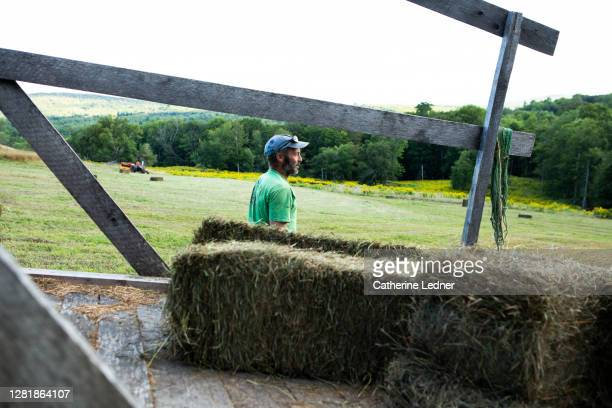 farm worker in recently shorn hay field with baled hay in foreground and clean field and rolling hills in background - catherine ledner stock pictures, royalty-free photos & images
