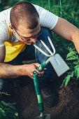 man working greenhouse