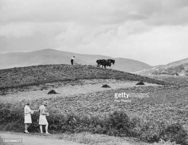 Farm worker ploughing a field with two Shire draught horses as two evacuees gather hedgerow blackberries on 29th September 1940 on farmland at...