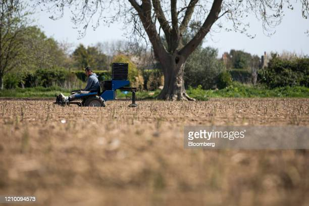 A farm worker sits on a cutting rig while harvesting asparagus from a field at a farm in Minster near Ramsgate UK on Wednesday April 15 2020 Almost...