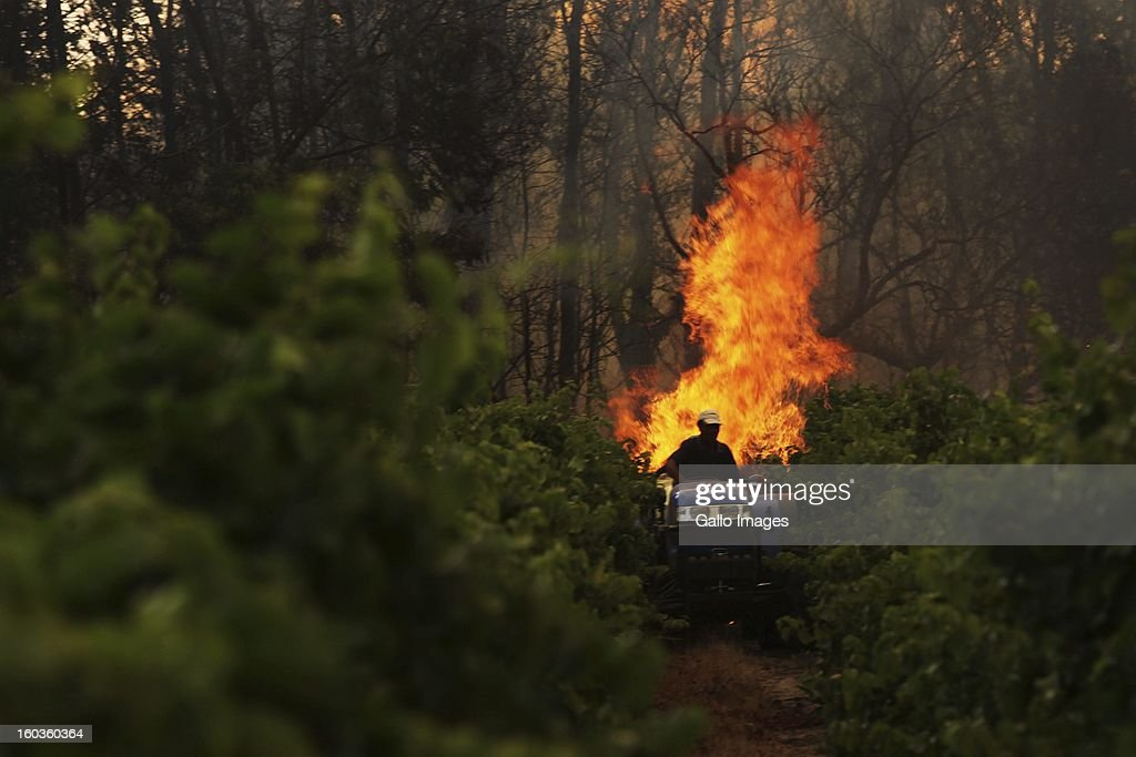A farm worker watches from a tractor as a fire rages through De Hoop farm on January 29, 2013, in Paarl, South Africa. No firemen were present as the veld fire swept through the entire Boland region in the Western Cape.