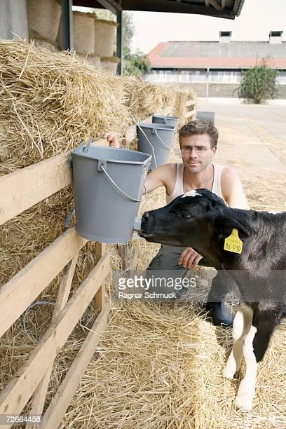 Farm worker watching calf drinking