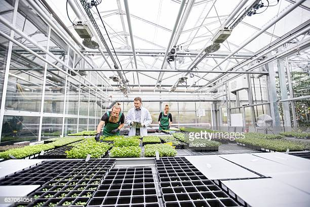 Farm workers and scientist working in greenhouse
