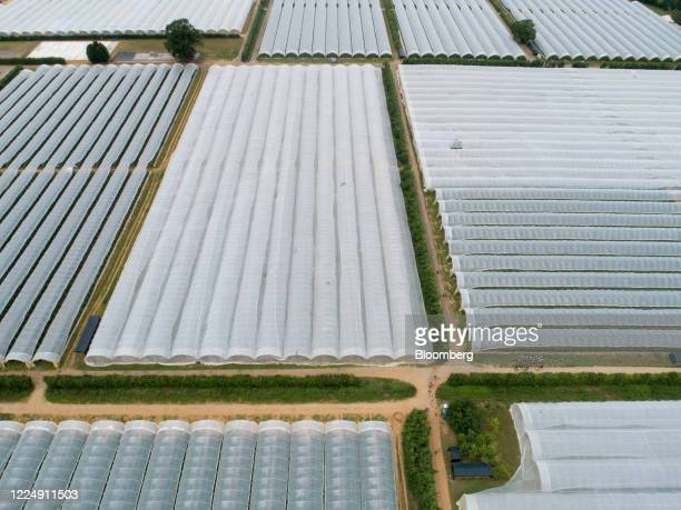 Farm workers carry freshly picked strawberries from poly tunnels at a farm in this aerial view in Milford UK on Monday July 6 2020 The UK will set up...