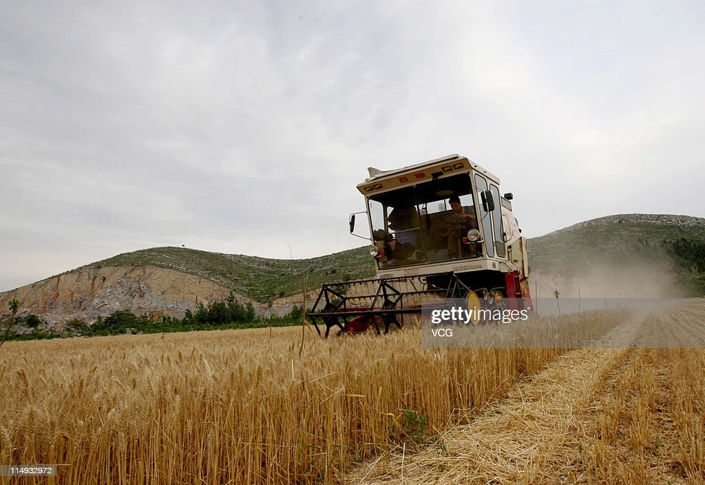 Farm workers harvest wheat with a combine harvester in a field on May 29, 2011 in Huaibei, Anhui Province of China. Anhui province will put 125,000 combine harvesters into this wheat harvest season, and it's estimated that the work will be completed basically in 10 days.