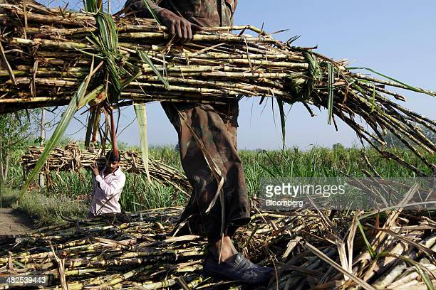 Farm workers load bundles of sugarcane onto a cart during a crop harvest in a field in the district of Hapur Uttar Pradesh India on Thursday April 3...