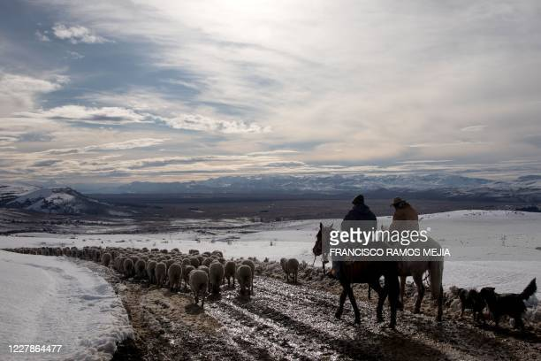 Farm workers on horseback herd sheep saved after heavy snowfall, some 30km east of Bariloche, in the Patagonian province of Rio Negro, Argentina on...