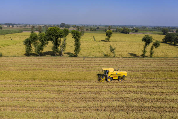 PAK: Rice Production as Pakistan Seeks to Boost Exports