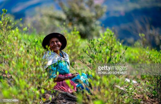 Farmen Natividad Quispe takes a break from her work at a coca plantation, in Trinidad Pampa, Yungas, Bolivia, on October 24, 2020. - Coca growers of...