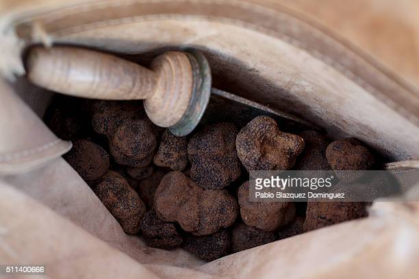 Farmer Alberto Salvador Chiva 28 shows the interior of his bag with his harvested truffles and his 'machete' underground at a truffle plantation on...