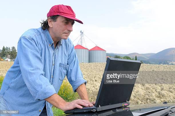 Análisis de trigo mercado de agricultores
