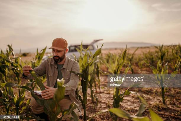 farmer analysis plants on his field - agronomist stock pictures, royalty-free photos & images