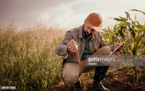 farmer analyzes his land - agronomist stock pictures, royalty-free photos & images