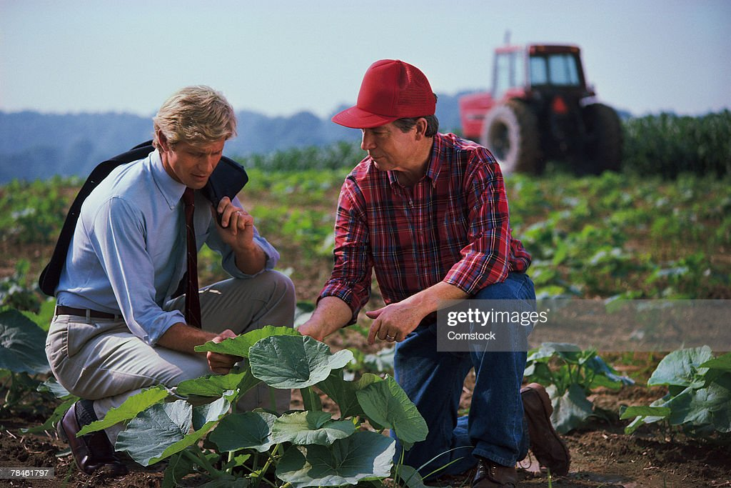 Farmer and businessman examining plant in field : Stock Photo