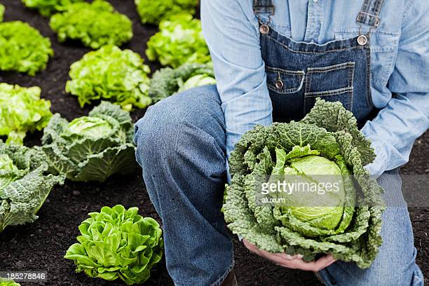 Farmer and cabbage
