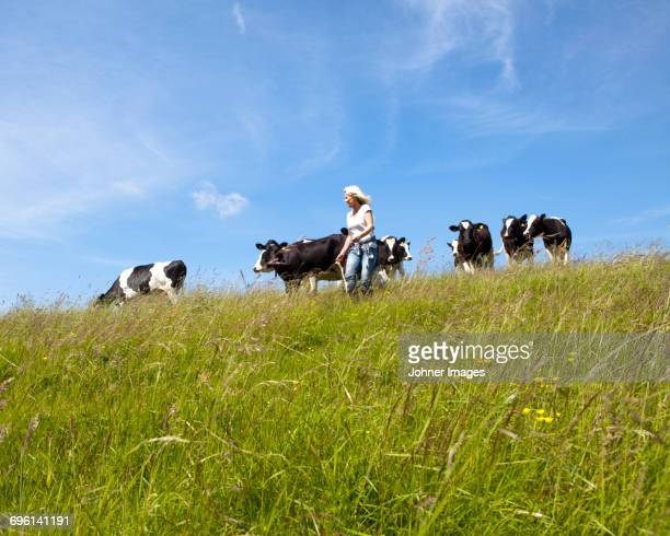 farmer and cows - durability stock photos and pictures