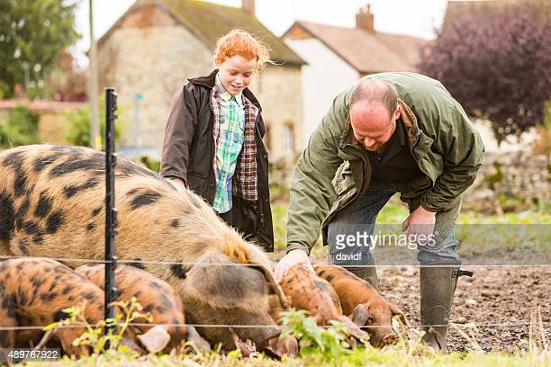 Farmer and Daughter Caring For Pigs on an Organic Farm