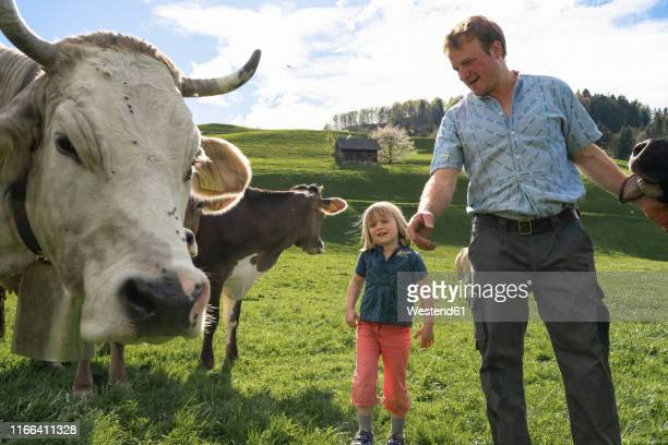 Farmer and daughter with cows on pasture