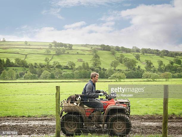 farmer and dog on tractor - organic farm stock photos and pictures