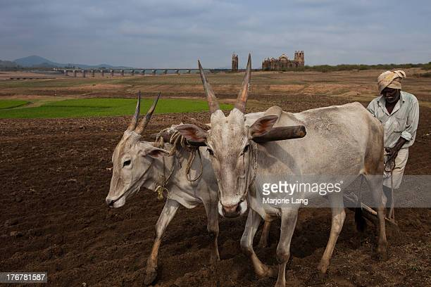 CONTENT] A farmer and his cattle working in the most traditional way in the fields by the Shettihalli rosary church ruins in the background Hassan...