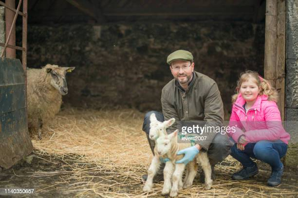 farmer and his daughter during lambing season. - shepherd stock pictures, royalty-free photos & images