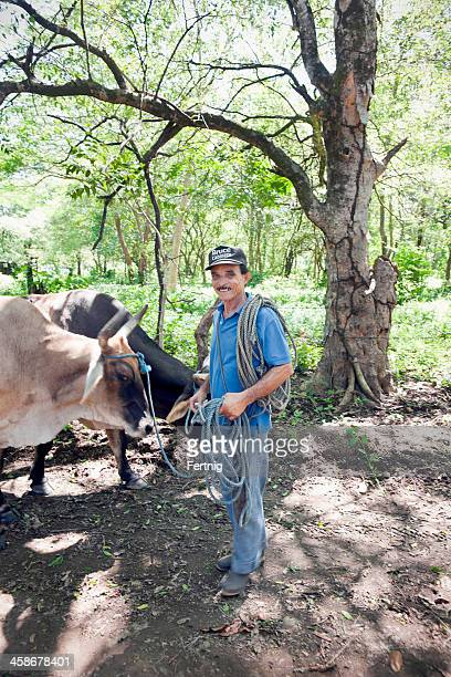 landwirt und sein rinder - guanacaste stock-fotos und bilder