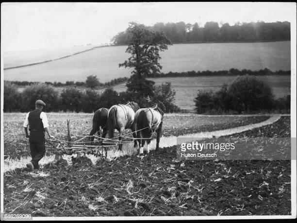 Farmer and his team of horses plough a field near Amersham, England.